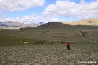 Photo: Ну, наконец-то настоящие верблюды!..