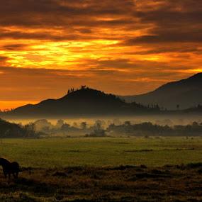 Misty Sunrise @ Bener Meriah by Taufiqurrahman Setiawan - Landscapes Mountains & Hills