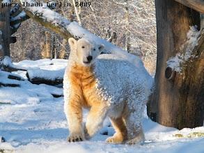 Photo: Knut praesentiert sein Winteroutfit :-)