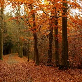 Autumn by Alena Ajaja Koutná - Landscapes Forests