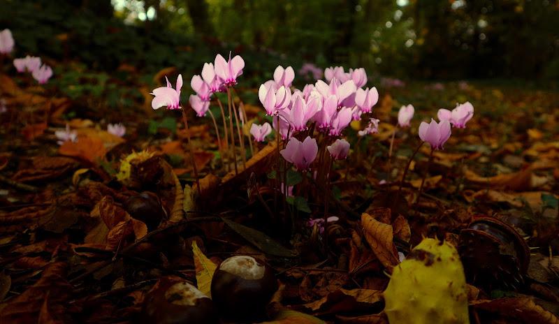 spine senza fiori, fiori senza spine di Nickthepic