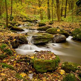 Thayatal in Austria by Frederik Schulz - Landscapes Forests ( stream, autumn, forest, austria, thaya )