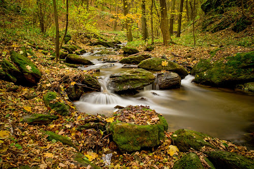 Thayatal in Austria by Frederik Schulz - Landscapes Forests ( stream, autumn, forest, austria, thaya )