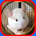 Chinchilla Care icon