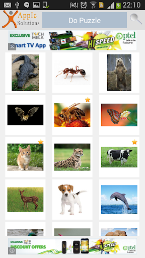 Puzzle of Animals Around