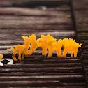 Yellow Shagshorn Fungus