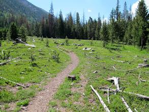 Photo: Avalanche path