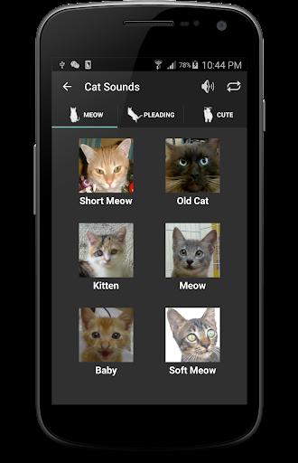 wanderlust: 貓貓的10 種叫聲和代表的意義