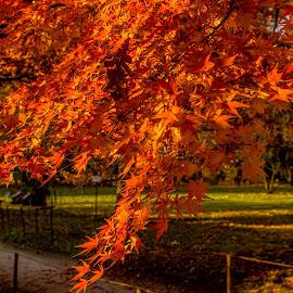 Autumn colours by Hariharan Venkatakrishnan - City,  Street & Park  City Parks
