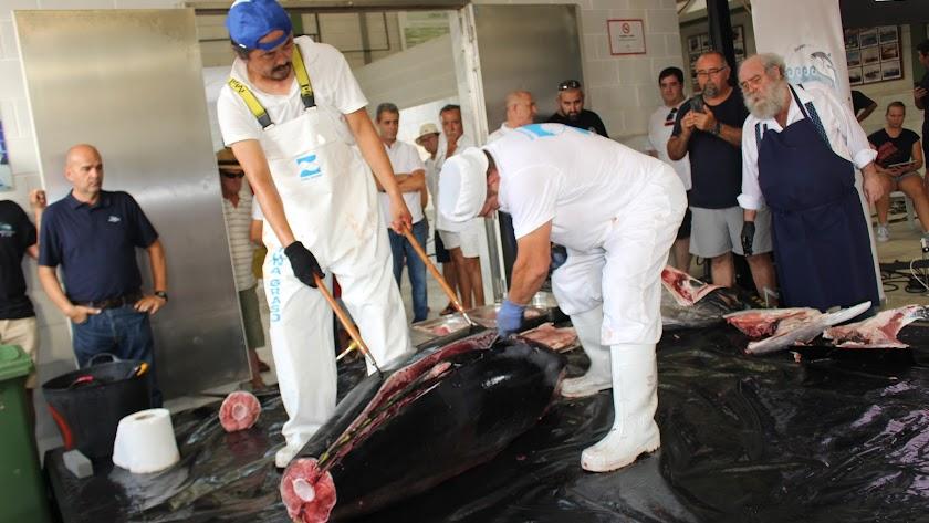 Momento en que el personal de despiece pasa el cuchillo por el espinazo del atún.