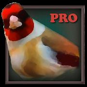 Vogelquiz Pro