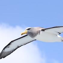 Tube-nosed Seabirds
