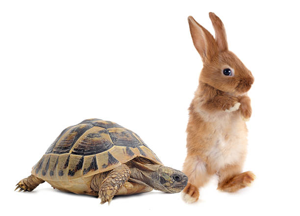 turtle & rabbit