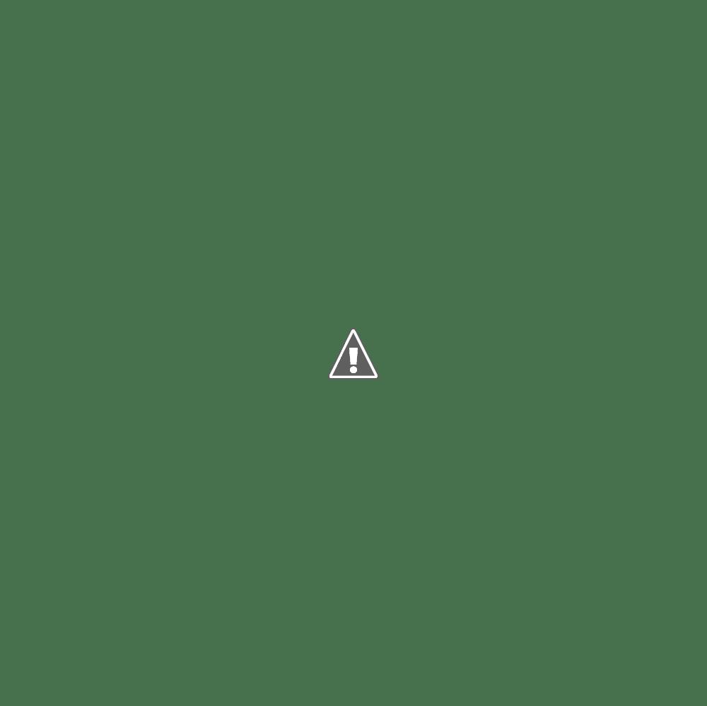 魚を捕らえたミサゴ