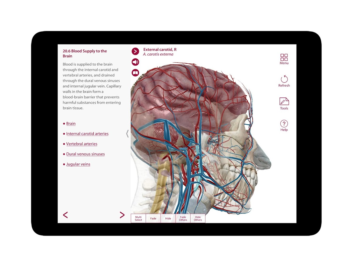 Google anatomy app