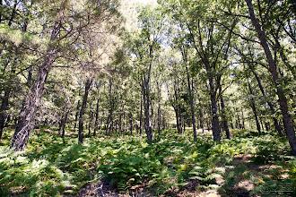 Photo: Castañar del Tiemblo. Avila. España. Serie realizada en julio de 2011