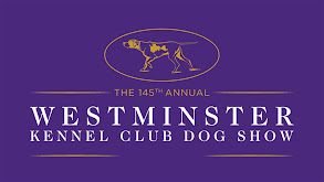145th Westminster Kennel Club Dog Show thumbnail