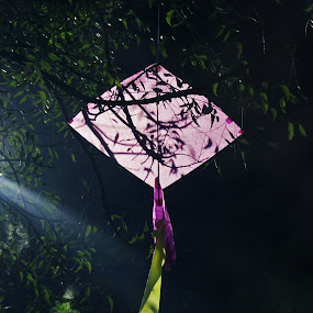 The elderly kite by Taeef Najib - Novices Only Objects & Still Life ( kite hanging tree branch old )