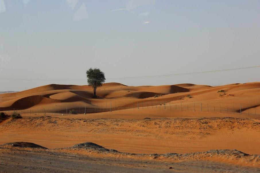 Мартовский Дубай с одной вылазкой за его пределы (без машины).