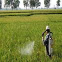 tips membuat pestisida icon