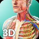 Human Anatomy 1.5