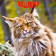 Norwegian Forest Cats Wallpaper‏