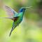 Hummingbird #10photoshopresize-002.jpg