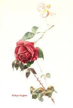 Photo: Rose01
