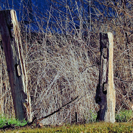 Fence posts by Gaylord Mink - Artistic Objects Still Life ( fence, nature, plants, posts )