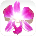 Smithfield Florist icon