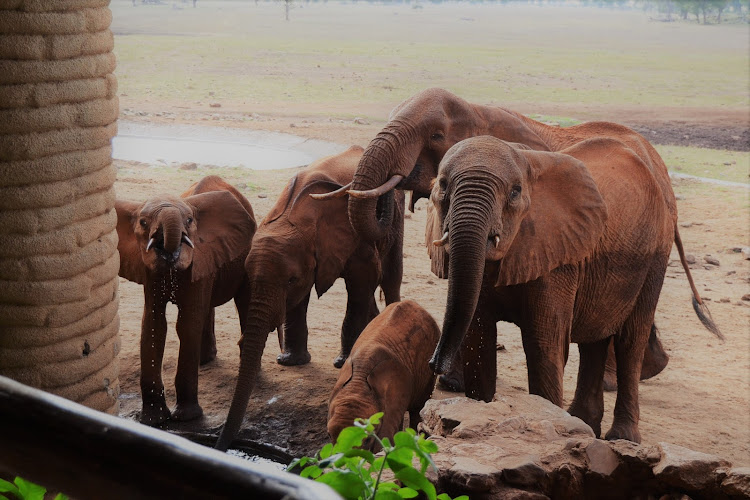 Elephants at the Sarova Salt Lick Game Lodge in Taita Taveta