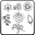 Draw Flowers Step by Step