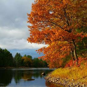 Autumn scenery by Sandy Davis DePina - Landscapes Waterscapes ( orange, autumn leaves, autumn, foliage, fall, autumn colors, river )
