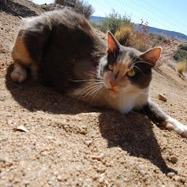 by Savannah Eubanks - Animals - Cats Portraits