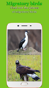 Birds of World - náhled