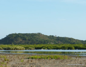 Photo: DAY 5: Leaving San Blas, birding the shrimp ponds
