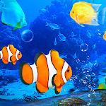 Aquarium Clown Fish Live Wallpaper 2019 2.2.0.2501