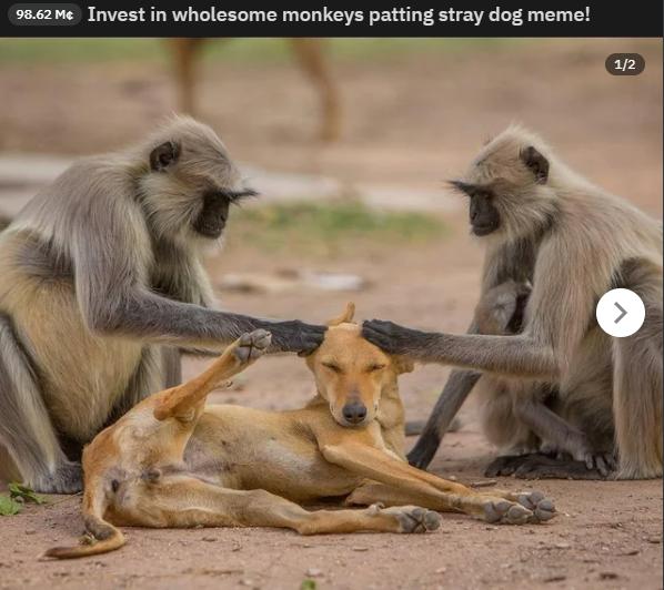 Meme de cachorro relaxado com macacos