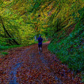 The runner by Andrew Lancaster - Sports & Fitness Running ( sports, beauty, natural, nature, trees, running, colouful, beautiful, leaves, road, fitness, autumn, runner, sport, colours )
