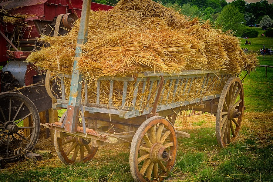 Hay Cart by Marco Bertamé - Artistic Objects Still Life ( hay, cart,  )