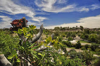 Photo: San Diego Botanical Gardens - View from the top