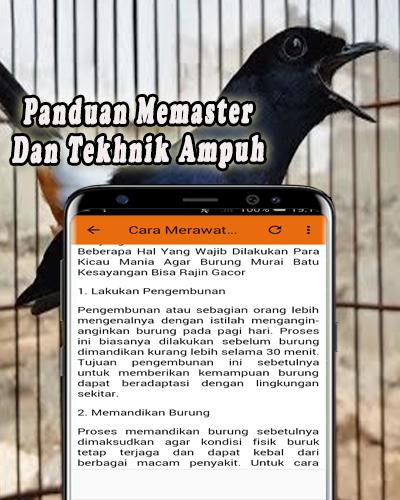 Download Kicau Murai Batu Offline Free For Android Kicau Murai Batu Offline Apk Download Steprimo Com