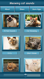 Cat meow ringtone - Free ringtones for mobile phones