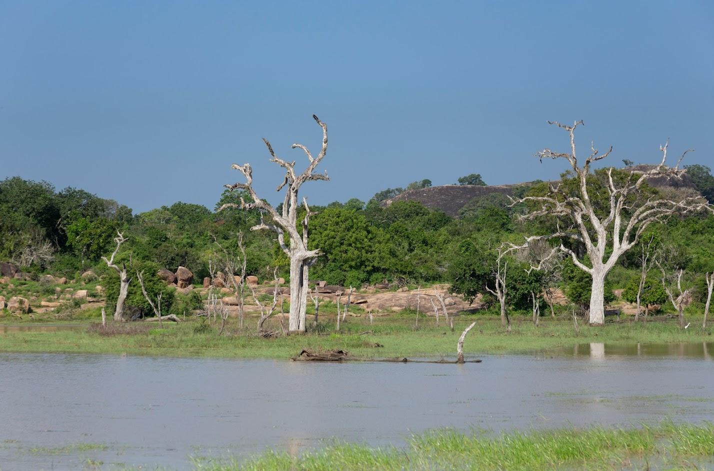 Отдых в Унаватуна - Форт Галле, национальный парк Яла и дождевой лес Синхараджа