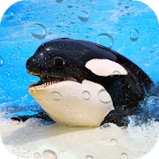 Orca Wallpaper Free