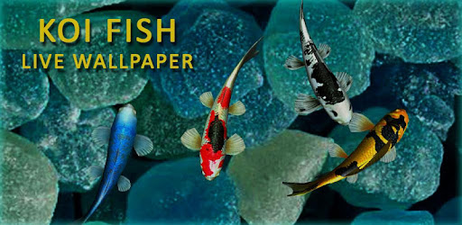 3d Koi Fish Wallpaper Hd Fish Live Wallpapers Free Apps On Google Play