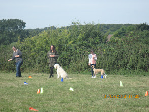 Photo: Katharine (Buddy's owner), Kerry and Alan Labradoodle, Lily and Henry Whippet