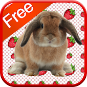 Bunny Games for Kids - Free