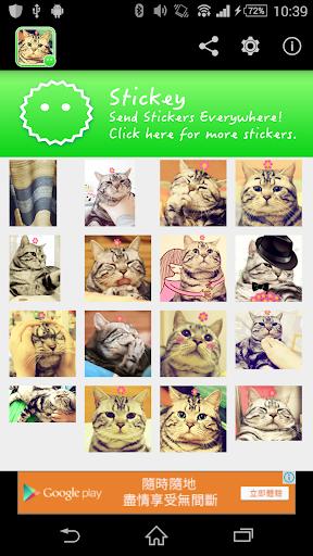 Stickey Cute House Cat