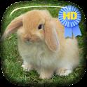 Cute Rabbit Jump Live Wallpape icon
